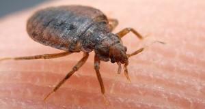 exterminateur , gestion parasitaire
